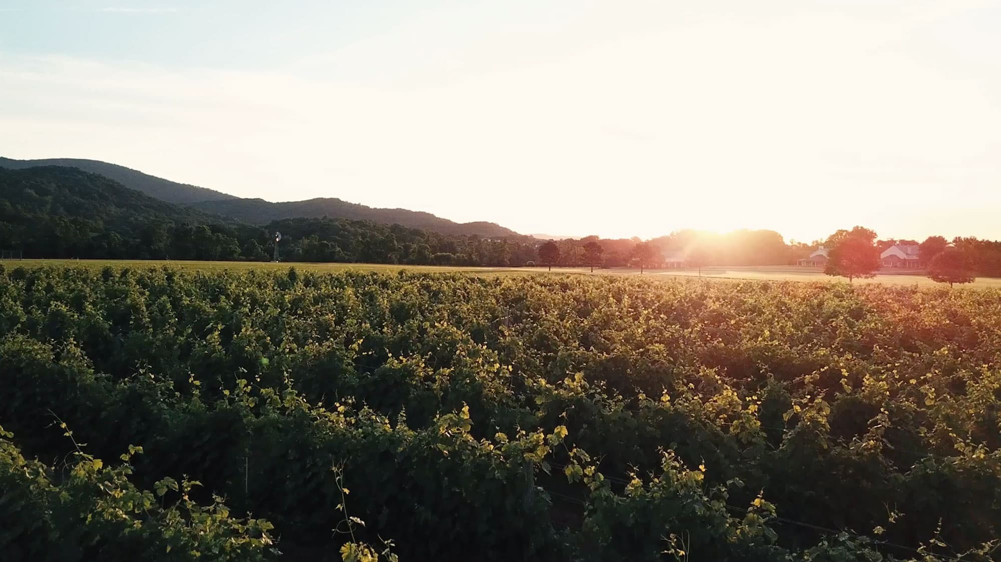 Beautiful Day at King Family Vineyards