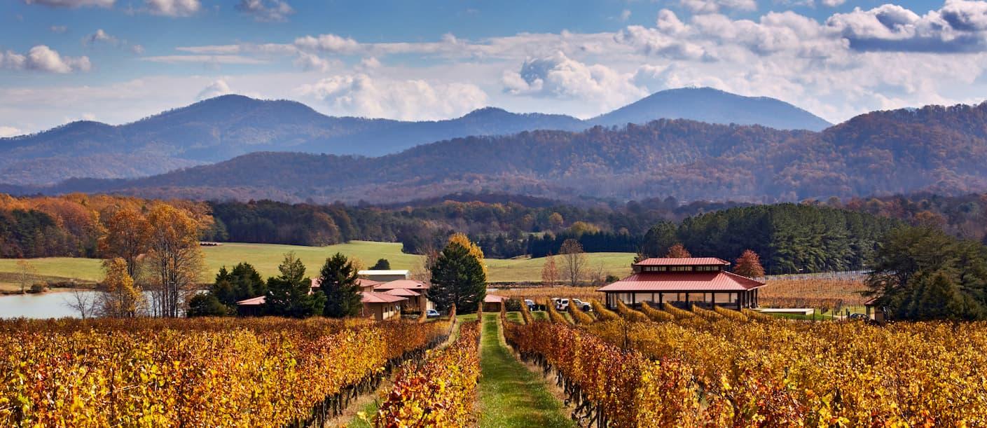 Afton Mountain Vineyard in the Fall